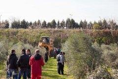 Γραμμική Καλλιέργεια ελιάς - Μηχάνημα Συγκομιδής