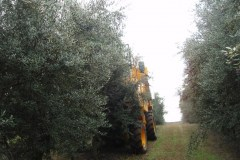 Γραμμική καλλιέργεια ελιάς - Μηχάνημα Συγκομιδής - Φυτώρια Αναστασόπουλος