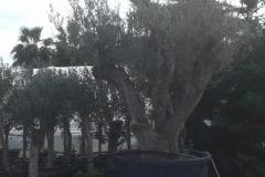 ΦΥΤΩΡΙΑ-ΑΝΑΣΤΑΣΟΠΟΥΛΟΣ