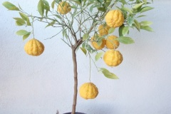 Λεμονιά - Lemon Trees  - Anastasopoulos Nurseries