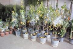 Προετοιμασία Παραγγελίας - Anastasopoulos Nurseries