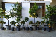 Φυτώρια Αναστασόπουλος - Anastasopoulos Nurseries