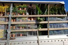 Διάφορα Καλλωπιστικά - Anastasopoulos Nurseries